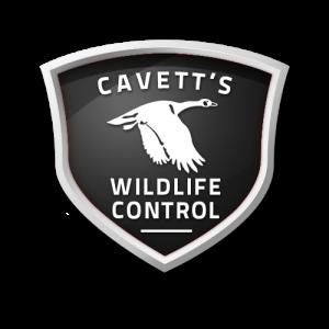 Cavett's Wildlife Control